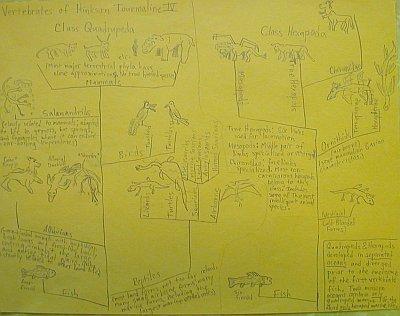 vertebrates of hinkson tourmaline iv